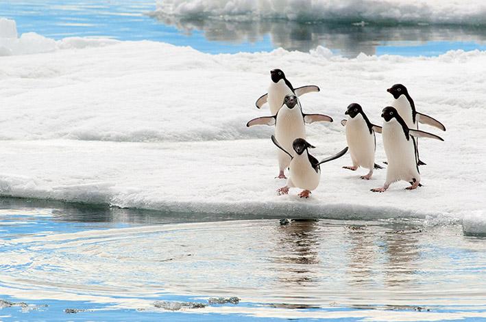 04_April_21_Antarctica