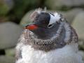 02_Februar_21_Antarctica
