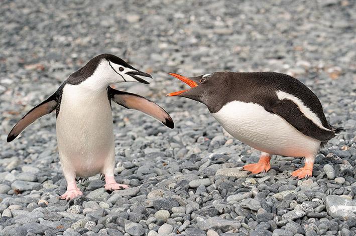 05_Mai_21_Antarctica