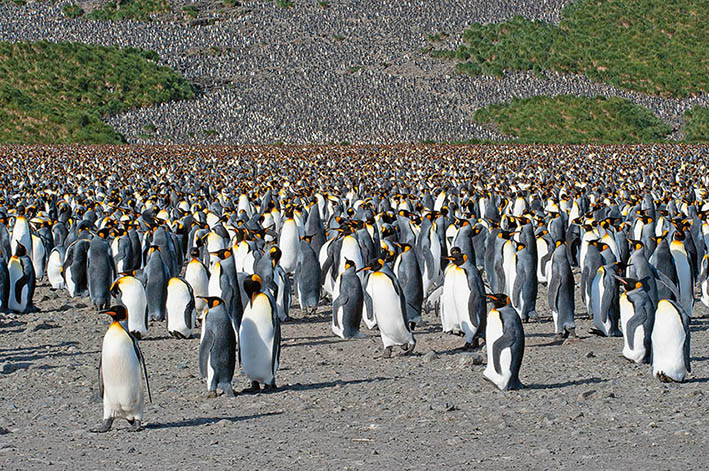 06_Juni_21_Antarctica
