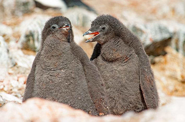 10_Oktober_21_Antarctica