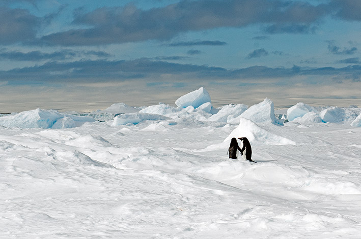12_Dezember_21_Antarctica