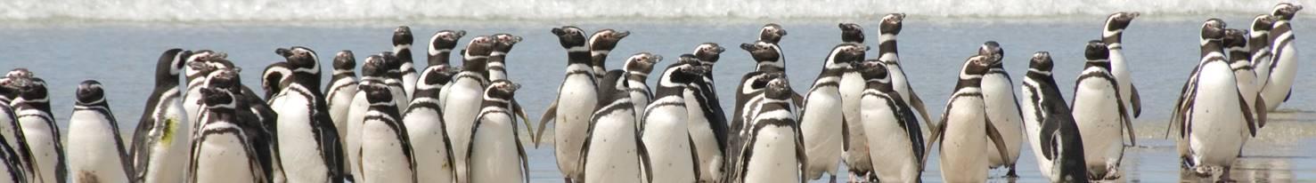 Antarctic Research Trust